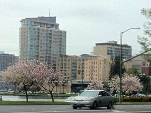 Spring trees along the lake