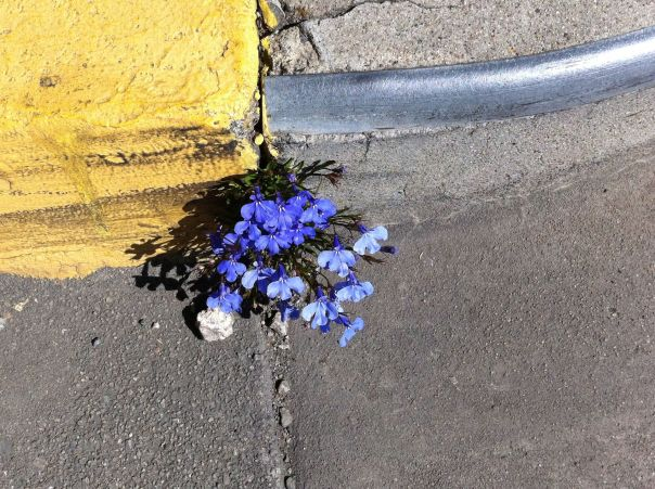 flowers in concrete